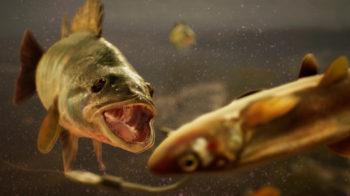 Скриншоты игры The Catch: Carp & Coarse